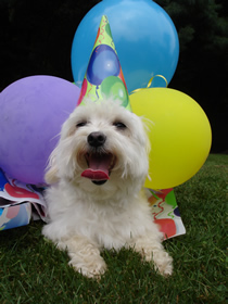 Doggie Day care birthday parties